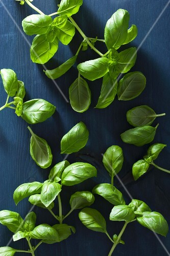 Fresh basil on a blue wooden surface