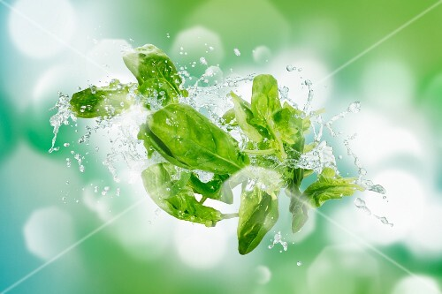 Spinach with a splash of water