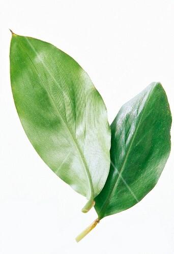 Two fresh cardamom leaves