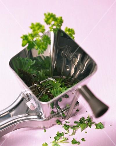 Herbs in a grinder