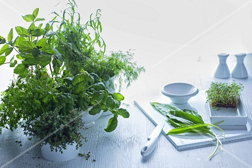 An arrangement featuring a chopping board and pots of fresh kitchen herbs