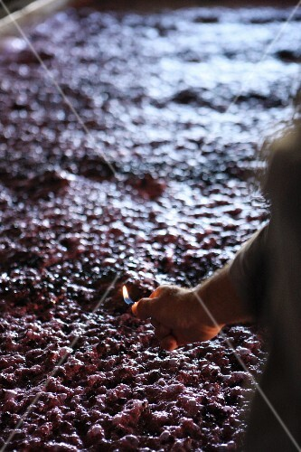 Fermenting red wine mash