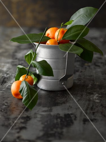 Ornamental oranges on sprigs in a metal pot