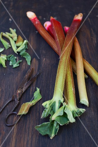 Rhubarb sticks with a pair of old scissors