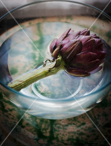 A purple artichoke in a bowl of water