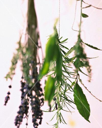 Various herb bouquets hanging upside down