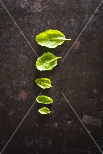 A row of five basil leaves