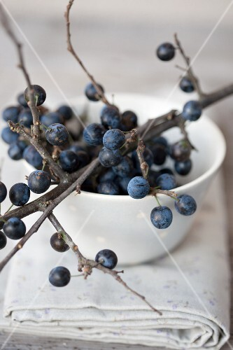 A sprig of sloes over a bowl