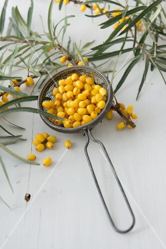 Sea buckthorn berries in a sieve