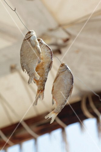 Dried fish hanging on a wire