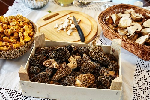 Porcini mushrooms, chanterelle mushrooms and morel mushrooms on a table with a white tablecloth