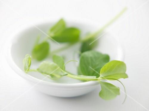 A bowl of pea shoots