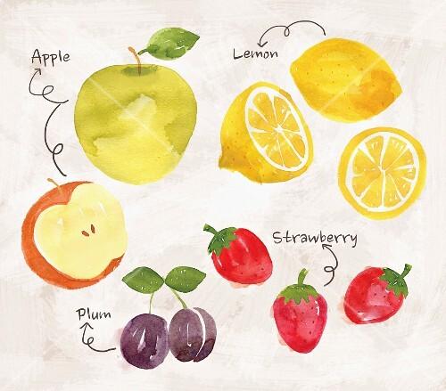 An arrangement of apples, lemons, plums and strawberries (illustration)