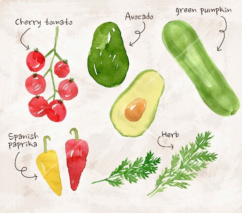 An arrangement of various vegetables and herbs (illustration)