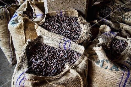 Jute sacks of cocoa beans at the cocoa plantation Roca Aguaize, Sao Tome, Africa