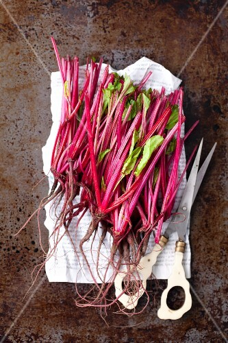 Young beetroots on a piece of newspaper with scissors