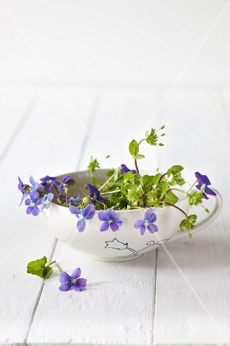 Violets in a porcelain cup