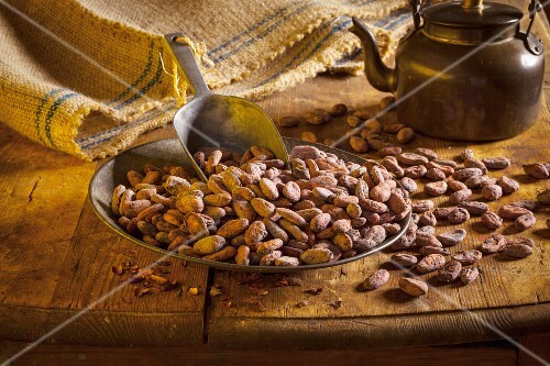 A tray of cocoa beans with a scoop in front of a kettle of water and a jute sack