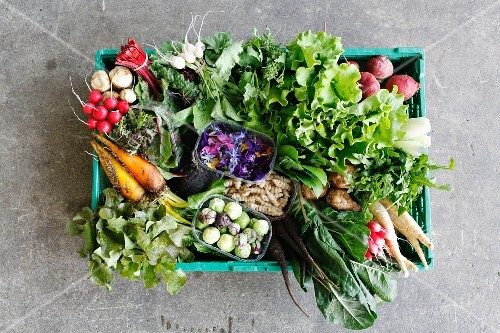 A vegetable crate of organic vegetables and lettuce (seen from above)