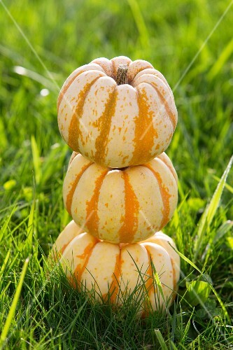 Three ornamental pumpkins stacked on grass