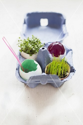 Easter eggs filled with jelly, wheat grass and rocket sprouts