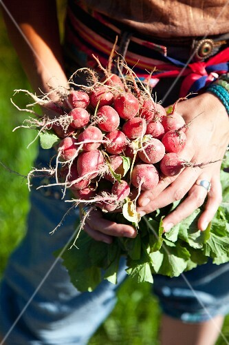 A woman holding fresh red radishes