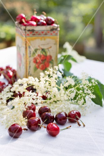 Fresh cherries and elderflowers on a garden table with an old tin decorated with cherries in the background