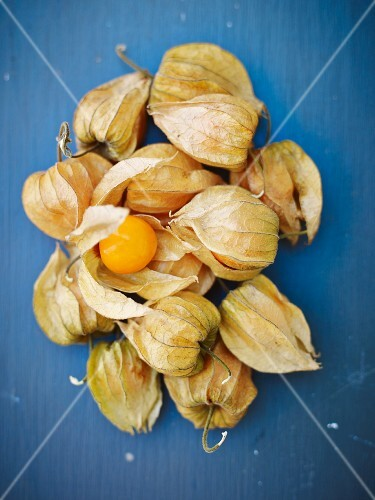 Physalis on a blue surface