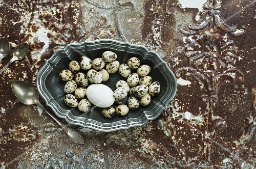 Quail's eggs in a pewter bowl on an antique metal surface