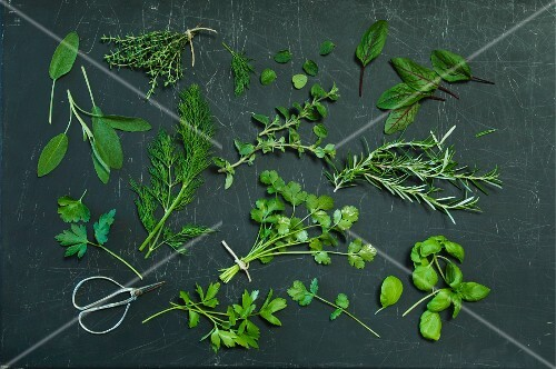 Various herbs on a dark surface (seen from above)