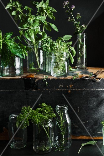 Various fresh herbs in a jars on and in front of a vintage wooden chest