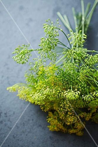 Sprigs of dill flowers