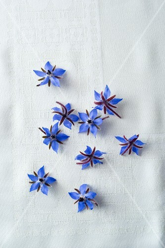 Borage flowers (seen from above)