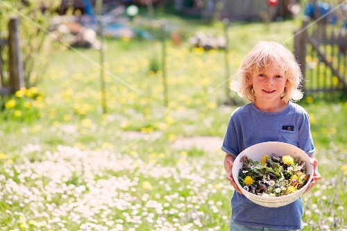 A little boy in a sunny garden holding a bowl of garden herbs and edible flowers