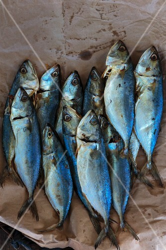 Fresh mackerels on brown paper (seen from above)