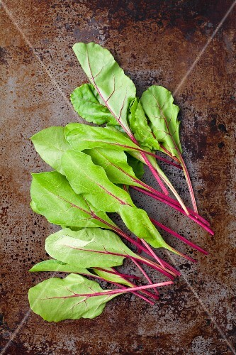 Young beetroot leaves on a metal surface