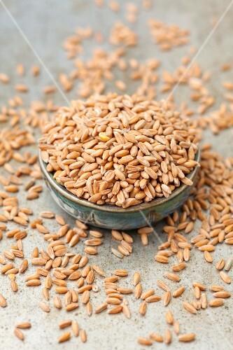 Spelt seeds in a ceramic bowl