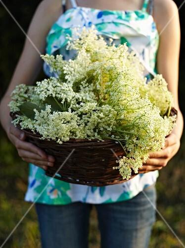 A woman carrying a basket of freshly harvested elderflowers