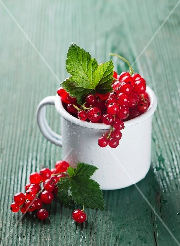 Red currants in an enamel mug