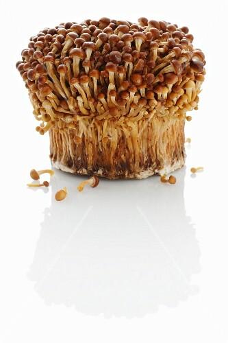 Golden enoki mushrooms