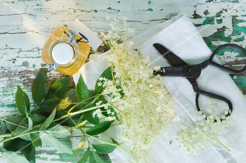 Elderflowers and a bottle of elderflower juice