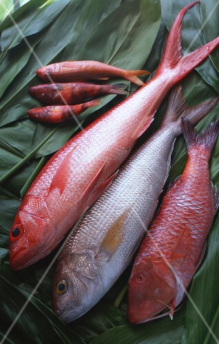 Fresh Hawaiian fish on green leaves