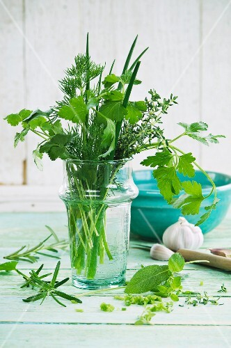 Various herbs in glasses of water (parsley, dill, oregano, chives, thyme, sage, rosemary, coriander, basil) on a wooden surface