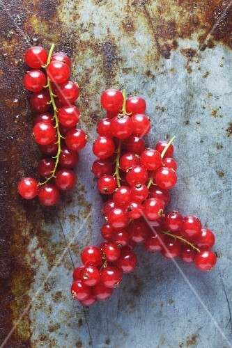 Redcurrants on a metal surface