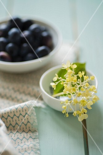 A bowl of blueberries and a dish of hydrangea buds