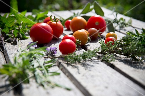 Various tomatoes and fresh herbs on a wooden table