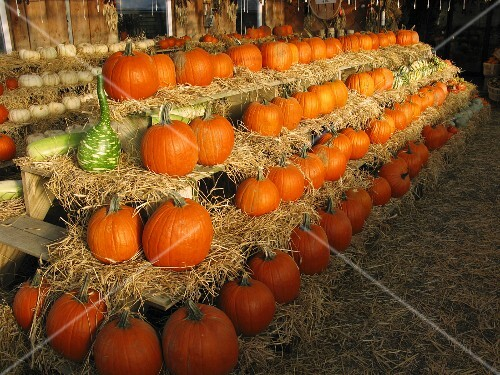 Pumpkins stacked in a barn