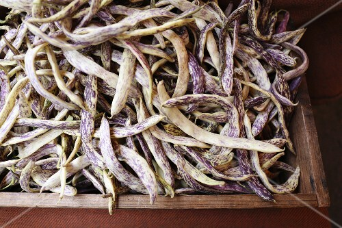 Dragons tongue beans in a wooden crate