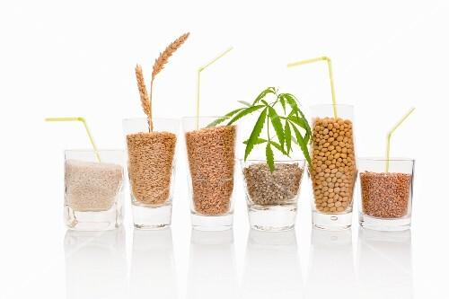 Various grains and seeds for making vegan milk
