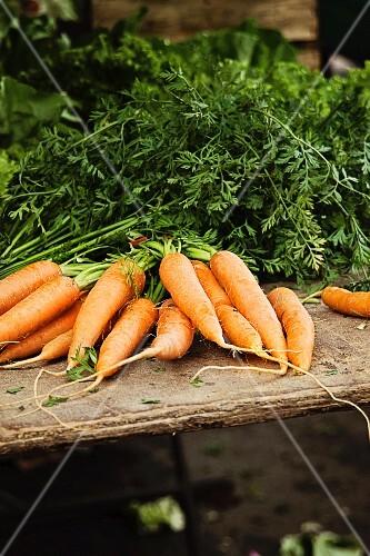 Bundles of fresh carrots at a market